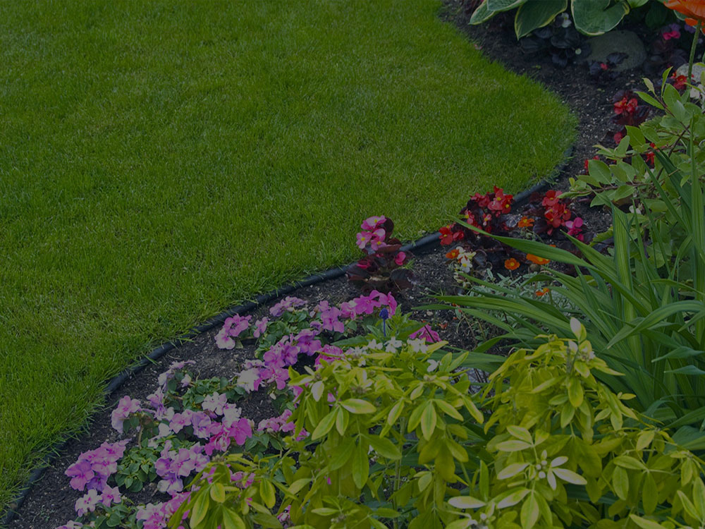 Holland Garden Design