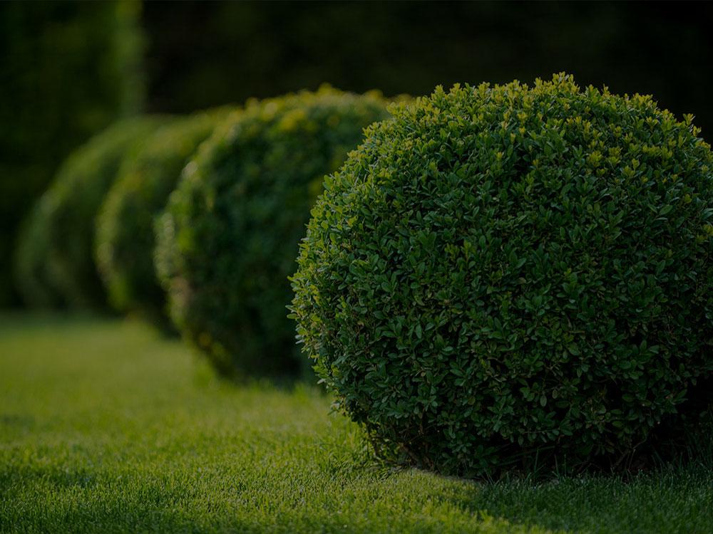 Feasterville-Trevose Landscaping