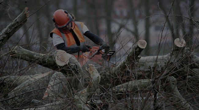 Southampton Tree Service