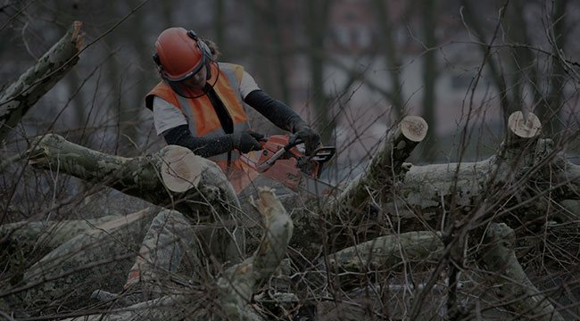 Feasterville-Trevose Tree Service