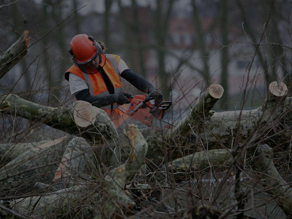 Holland Tree Service